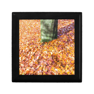 Ground around tree trunk covered with autumn leave gift box