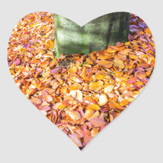 Ground around tree trunk covered with autumn leave heart sticker