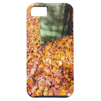 Ground around tree trunk covered with autumn leave iPhone 5 cases