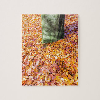 Ground around tree trunk covered with autumn leave jigsaw puzzle
