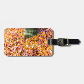 Ground around tree trunk covered with autumn leave luggage tag