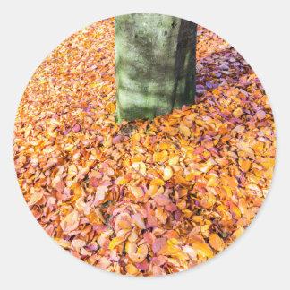 Ground around tree trunk covered with autumn leave round sticker