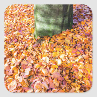 Ground around tree trunk covered with autumn leave square sticker