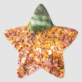 Ground around tree trunk covered with autumn leave star sticker