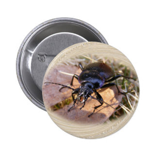 Ground Beetle ~ button