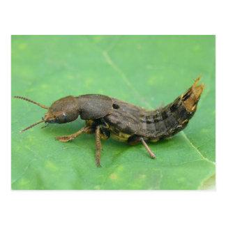 Ground Beetle Larva Postcard. Postcard