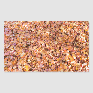 Ground covered with beech tree leaves in autumn