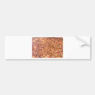 Ground covered with beech tree leaves in autumn bumper sticker