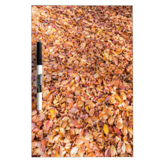 Ground covered with beech tree leaves in autumn dry erase board