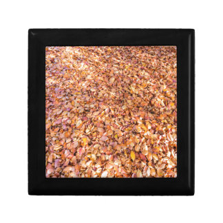 Ground covered with beech tree leaves in autumn gift box