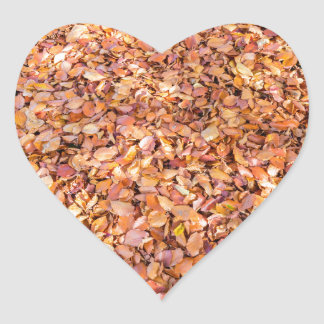 Ground covered with beech tree leaves in autumn heart sticker
