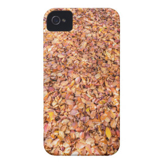 Ground covered with beech tree leaves in autumn iPhone 4 covers