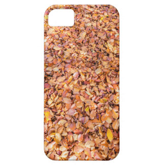Ground covered with beech tree leaves in autumn iPhone 5 case
