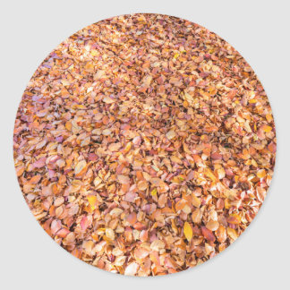 Ground covered with beech tree leaves in autumn round sticker