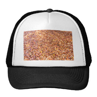 Ground covered with beech tree leaves in autumn trucker hat