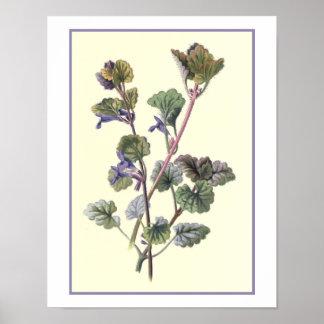 """Ground Ivy"" Botanical Illustration Poster"
