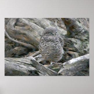 Ground owl poster