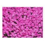 Ground Pink 2 Postcard