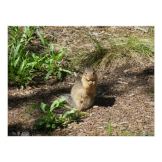 Ground Squirrel 4 Photo Print