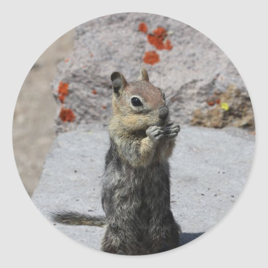 Ground Squirrel Classic Round Sticker