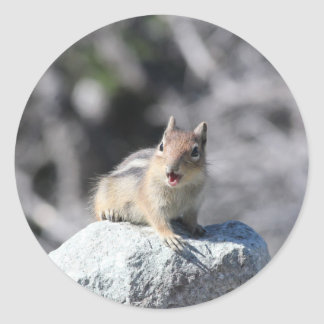 Ground Squirrel Round Sticker