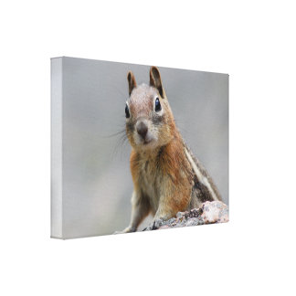 Ground Squirrel Stretched Canvas Prints