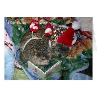 Groundhog Christmas Card