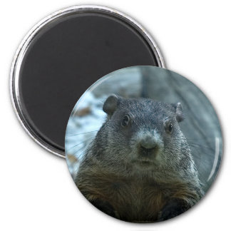 Groundhog Day! Magnet