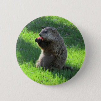 Groundhog eating 2 inch round button