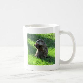 Groundhog eating coffee mug