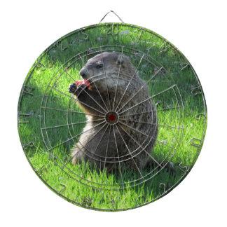 Groundhog eating dartboard