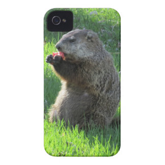 Groundhog eating iPhone 4 covers