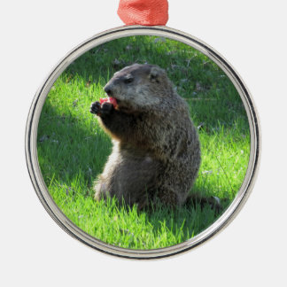 Groundhog eating metal ornament