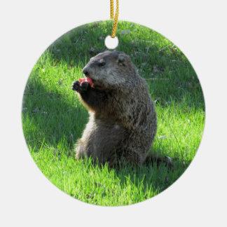 Groundhog eating round ceramic ornament