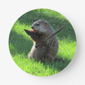 Groundhog eating wallclock