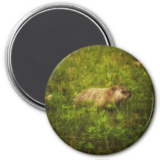 Groundhog in a field magnet