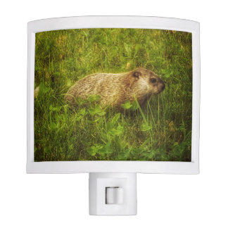 Groundhog in a field night light