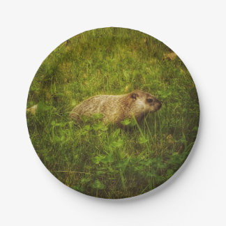 Groundhog in a field plates