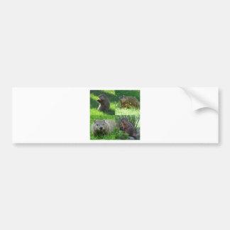 Groundhog Medley Bumper Sticker