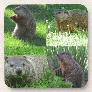 Groundhog Medley Coaster