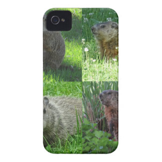 Groundhog Medley iPhone 4 Covers