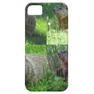 Groundhog Medley iPhone 5 Cases