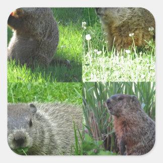 Groundhog Medley Square Sticker
