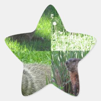 Groundhog Medley Star Sticker
