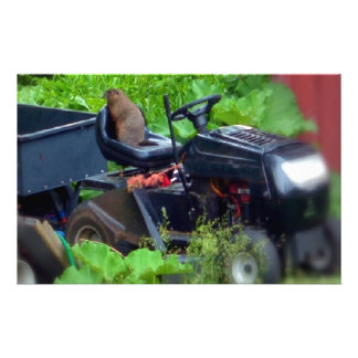 Groundhog on a Lawn Mower Personalized Stationery