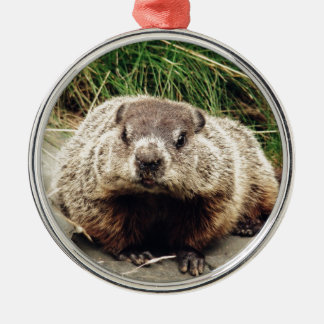 Groundhog Silver-Colored Round Ornament