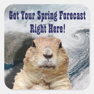 Groundhog Spring Forecast Square Sticker