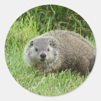 Groundhog Sticker