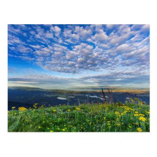 Groundsel Wildflowers in the Swan Range Postcard