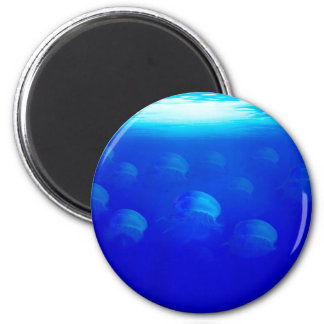 Group blue jellyfish in the Atlantic ocean swiming 2 Inch Round Magnet